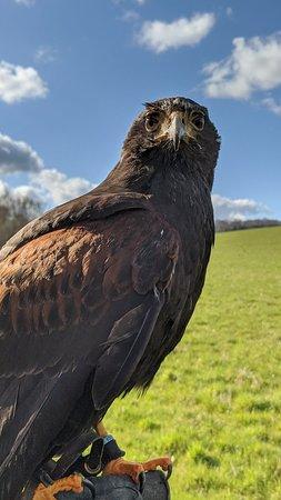 Fantastic falconry experience
