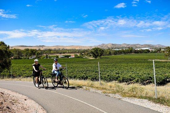 Coast & Co | E-Bike Hire