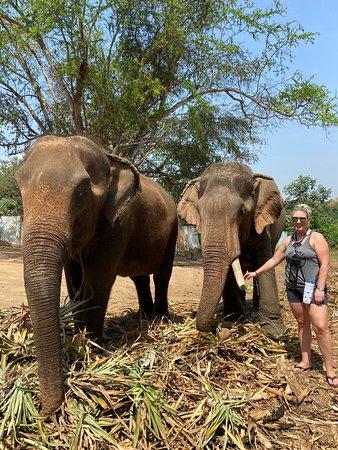 大象世界北碧(Kanchanaburi)與曼谷的私人接送服務照片