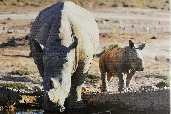 Volledige dag Cape Safari Inverdoorn ...
