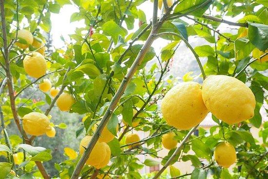 Amalfi Lemon Experience - Uit Napels