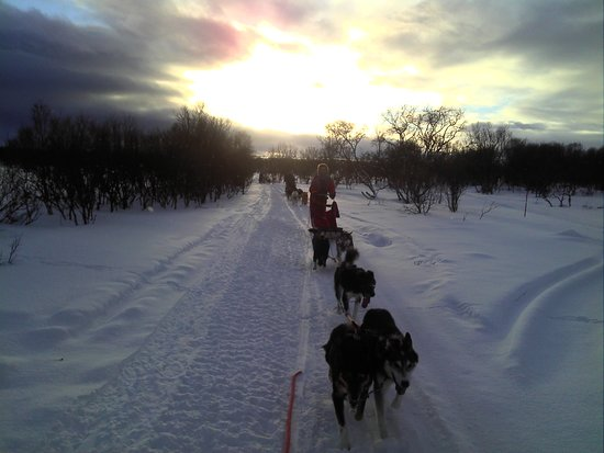 Nesseby, Norway: www.nanouak.com In the Taiga by sled
