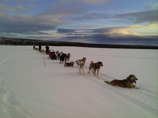 Nesseby, Norway: www.nanouak.com In the Taiga tundra by sled