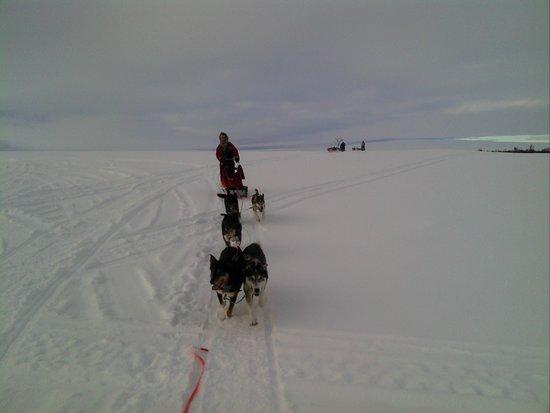 Nesseby, Norway: www.nanouak.com In the tundra by sled