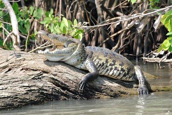 Aquário de Croc & Turtle