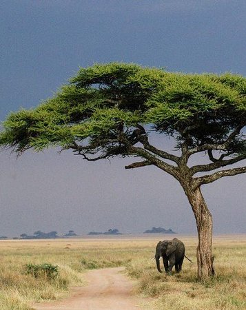 """""""Reliable, affordable, and amazing safari experience, Check with Exceed Expectations Tours!!"""