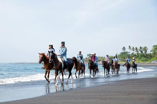 Full-Day Bali Horse Riding Adventure...