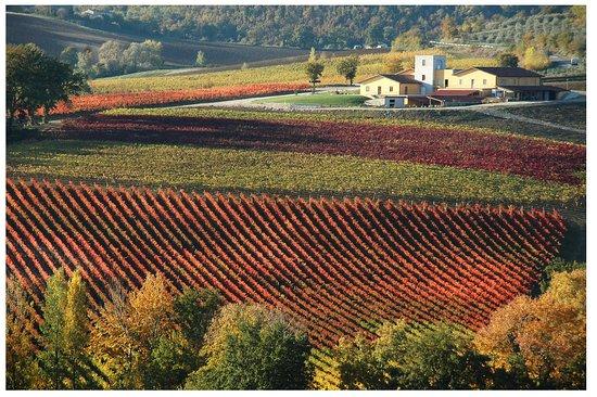 Gualdo Cattaneo, Itália: SIGNÆ winery