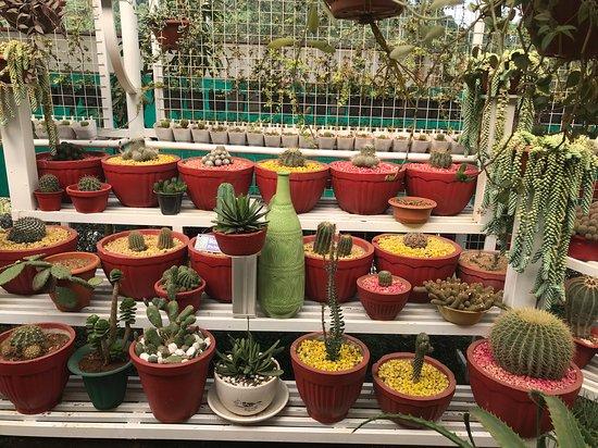 Carmelgiri Botanical Garden