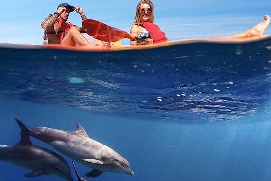 Safari de caiaque com golfinhos e...