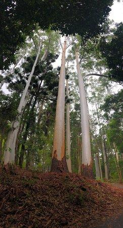 Rainforest in a nutshell