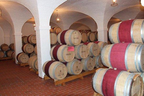 葡萄酒和葡萄藤全日遊
