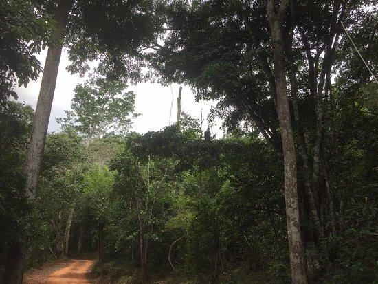 Shimba Hills National Reserve ภาพถ่าย