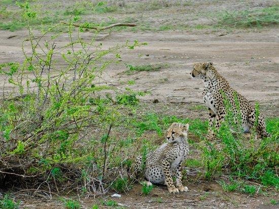 Migration at Serengeti National Park