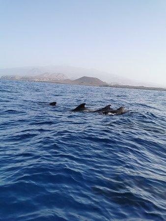 BIOSEAN Whale Watching & Marine Science لوحة