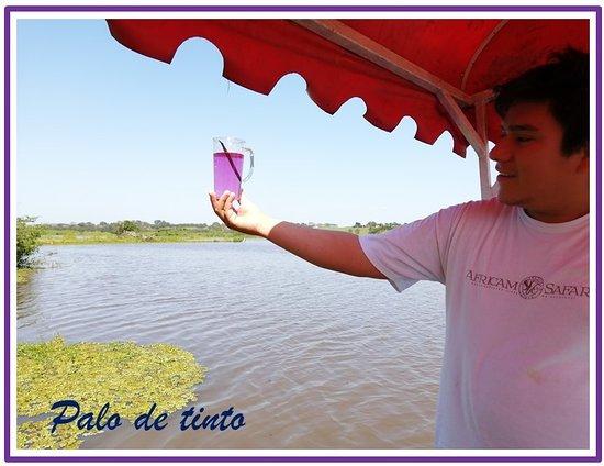 Catazajá, México: Explicación e importancia histórica del Palo de tinto o palo Campeche.