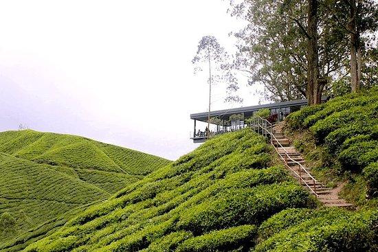 Tour delle Cameron Highlands da Kuala