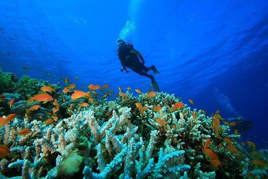 Scuba Diving and Water Sports Tour in...