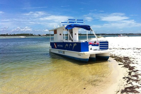 3 Hour Private Powerboat Dolphin Cruise with Remote Beach Stop up to...