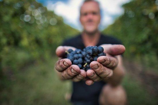 Achter de wijnen en wijnstokken