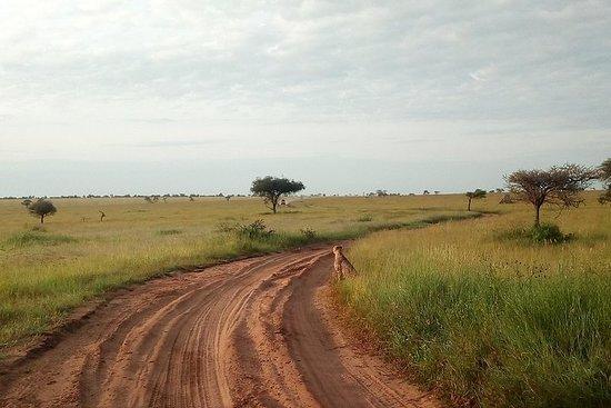 From Kenya to Tanzania luxury Safari...