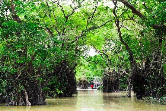 Tour nella foresta di paludi