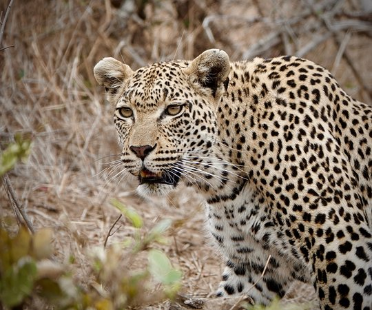 Mala Mala Private Game Reserve ภาพถ่าย