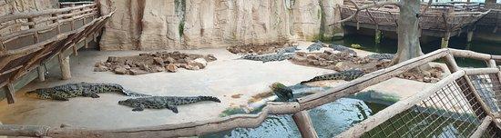 Beauvoir, Francie: Crocodiles