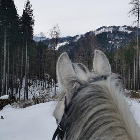 Jesenice, Slovenia: Trail ride at Kmetija Smolej😁🔝 Get your ride now at (+386) 041/566-847 or info@kmetijasmolej.si 😁🐎