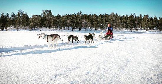 Arctica Lapland