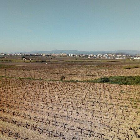 Sant Pere Molanta, Spain: Comienzan a sacar hojas las viñas del penedès. Barcelona