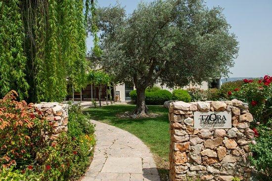 Beit Shemesh, Israel: The winery
