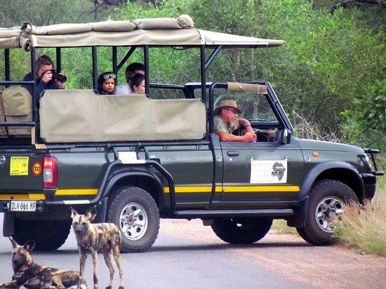 Marloth Park, Republika Południowej Afryki: wilddog day