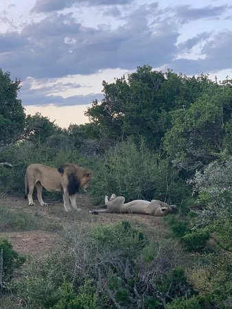 Kwandwe Private Game Reserve – fotografija