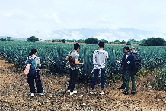 Tequila Route Tour with a Local Expert