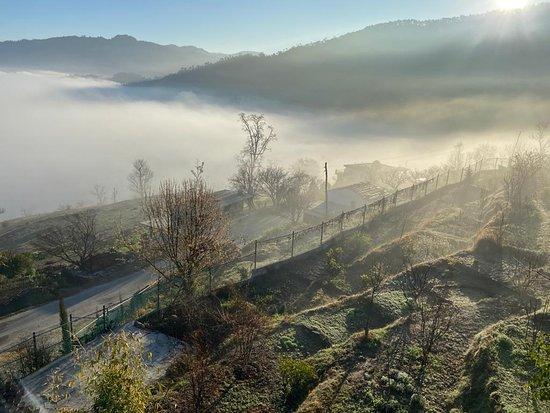 Peora, Индия: Morning mists