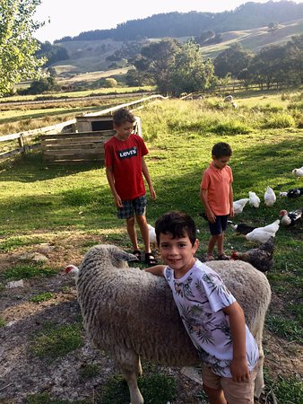 Whenuakite, Новая Зеландия: This is a fabulous place to bring children. My grandchildren had a marvellous time making friends with the animals.