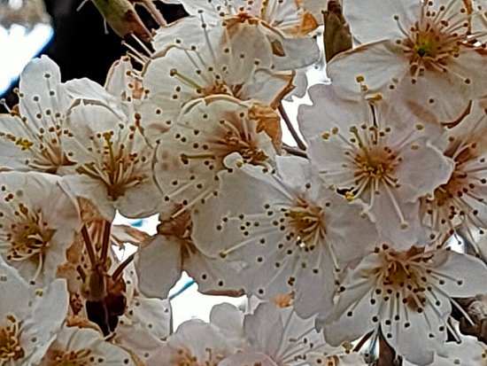 Angyohara Shizen no Mori