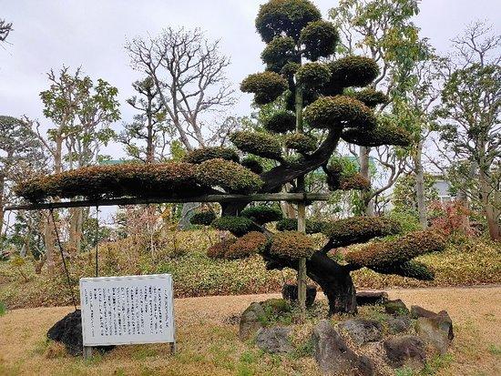 JA Saitam Angyo Nosambutsu Chokubaisho