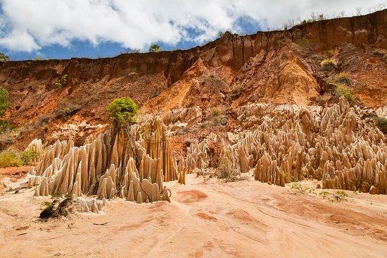 Mahajanga, Madagascar: TOUR - Ankarafantsika