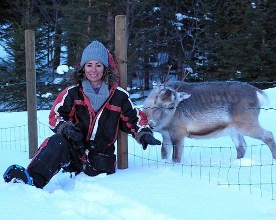 Alta kommune, Norge: Come and say hello to Miessi the reindeer at Seiland House