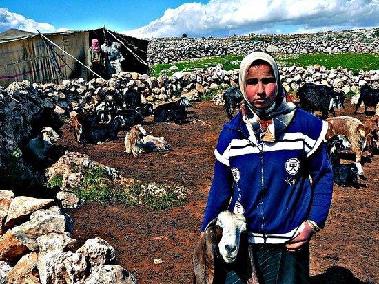 Apamée, Syrie: Apamea 77