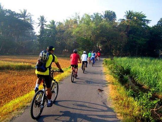 Gowez Bali Cycling Tours