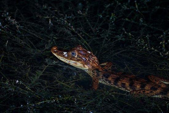 Safari de nuit en bateau
