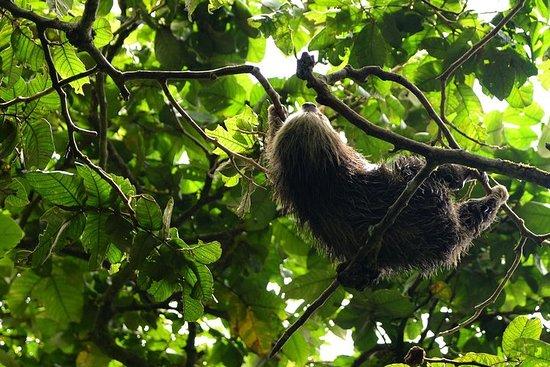 Mombacho Cloud Forest Reserve: Hike...