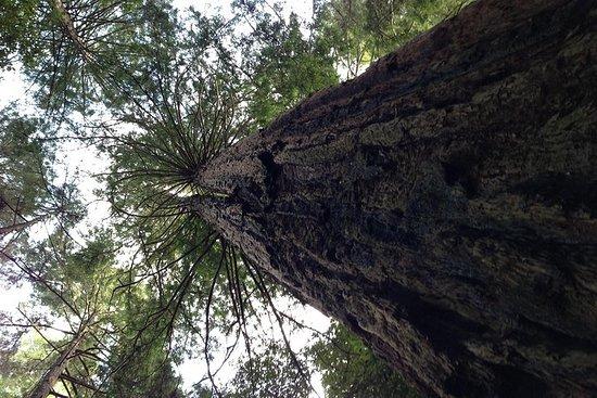 Excursion au comté de Muir Woods et...