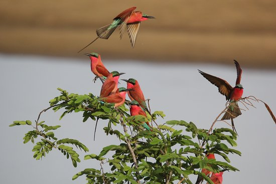 Luambe National Park Photo