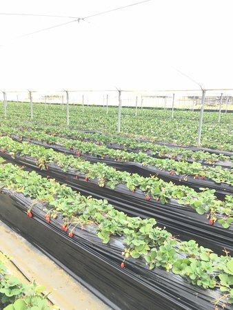 Nakano Fruit Farm