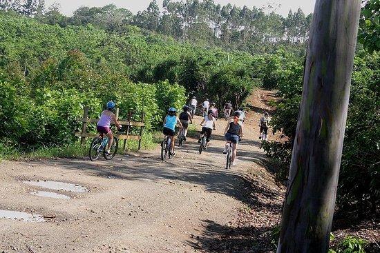 CATIE Mountain Bike