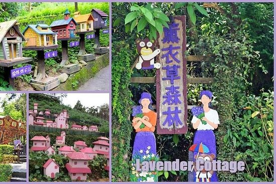 Full-Day Taichung and Lavender Cottage Private Tour with Lunch